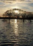 23rd Jan 2021 - Water, Water Everywhere
