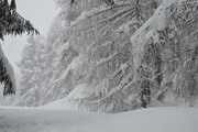 23rd Jan 2021 - white woods