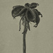 In the Manner of Karl Blossfeldt