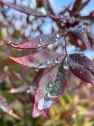 23rd Jan 2021 - Rain Drops