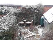 23rd Jan 2021 - Snow!