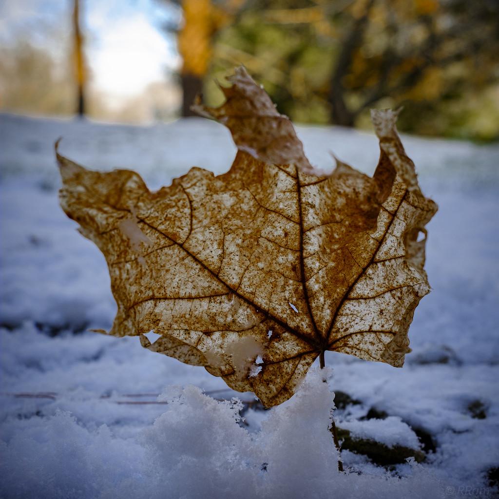 Frozen Fall by ramr