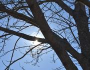 23rd Jan 2021 - Sun behind my tree