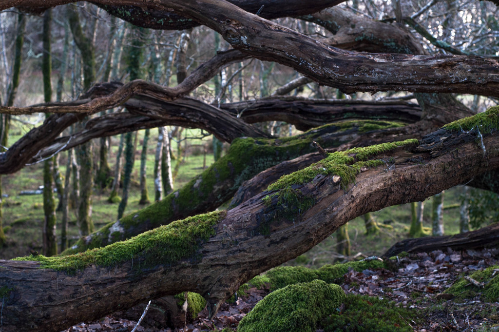 Into the woods we go by overalvandaan