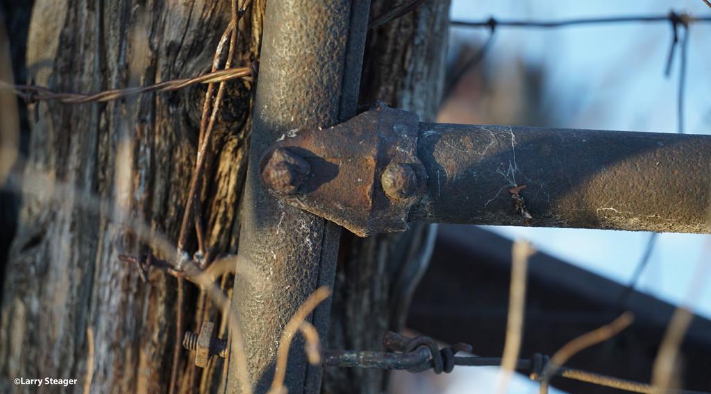 Fence post by larrysphotos