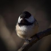 23rd Jan 2021 - Face to beak