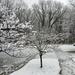 Snowy Walk 11-21-20