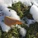 Grass under snow 11-23-20