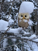 23rd Jan 2021 - Owl 🦉 on the trail!