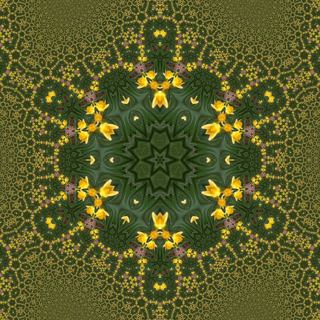 Daffodil kaleidoscope by inthecloud5
