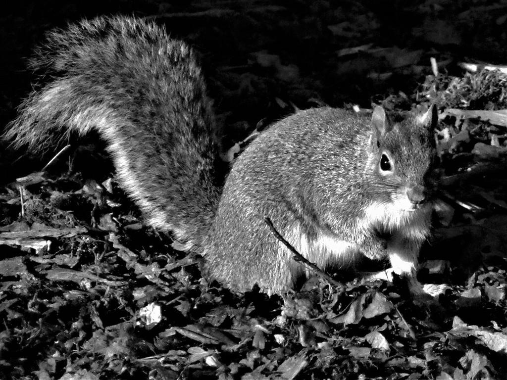 Squirrel - Bush Park by thedarkroom