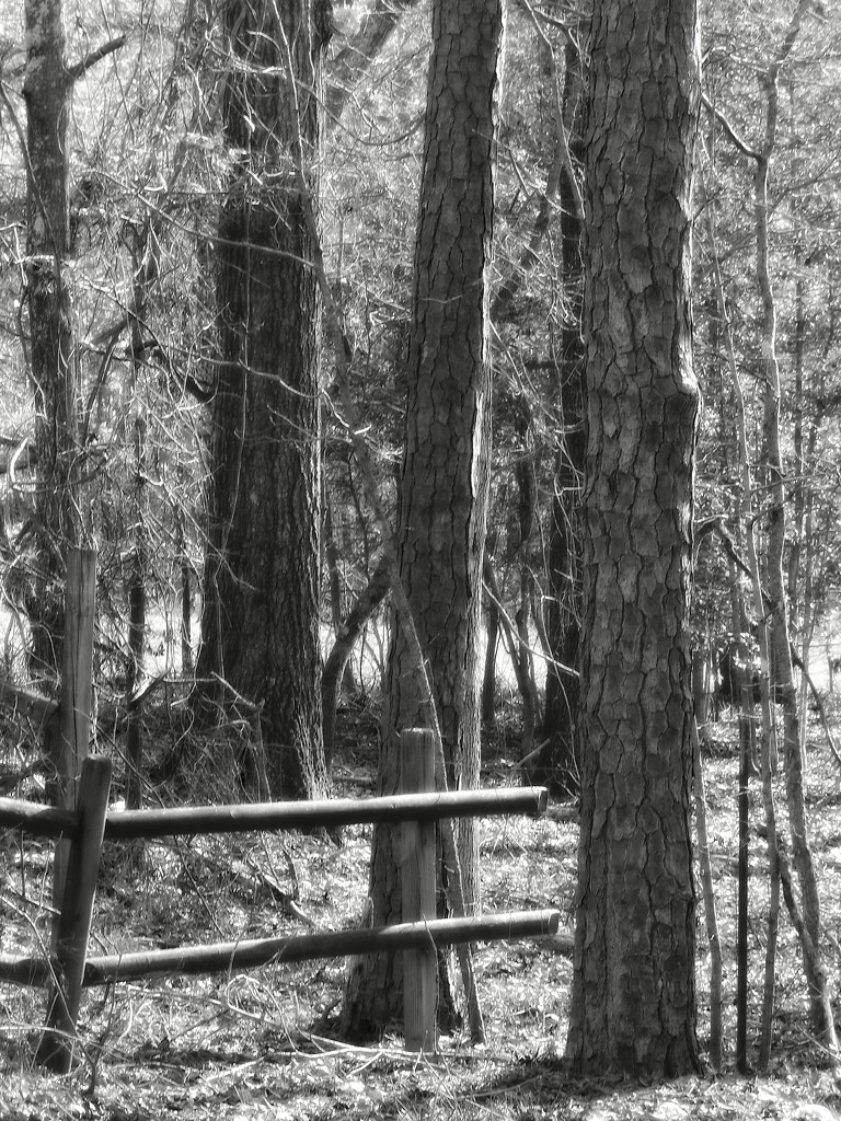 Fence lines... by marlboromaam