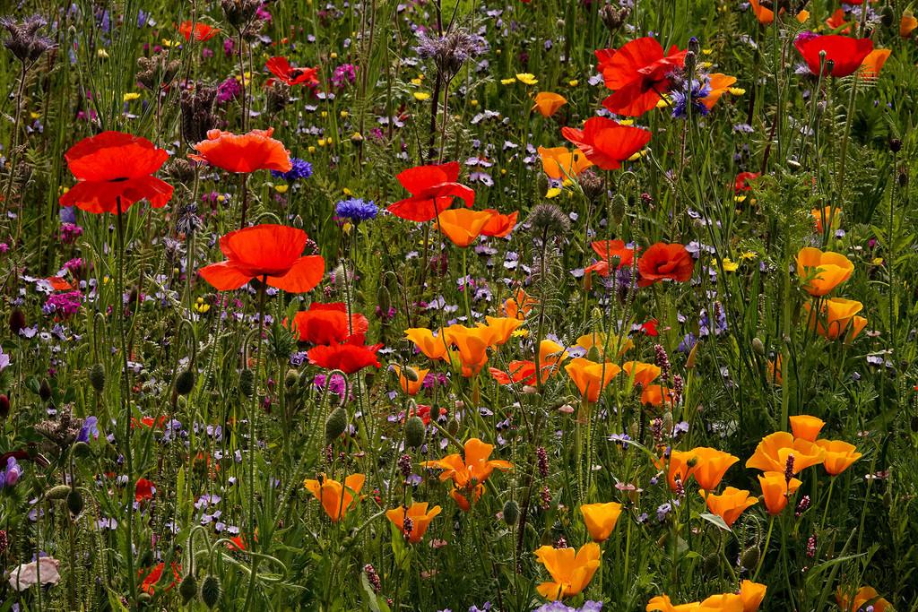 Wildflower garden by maureenpp