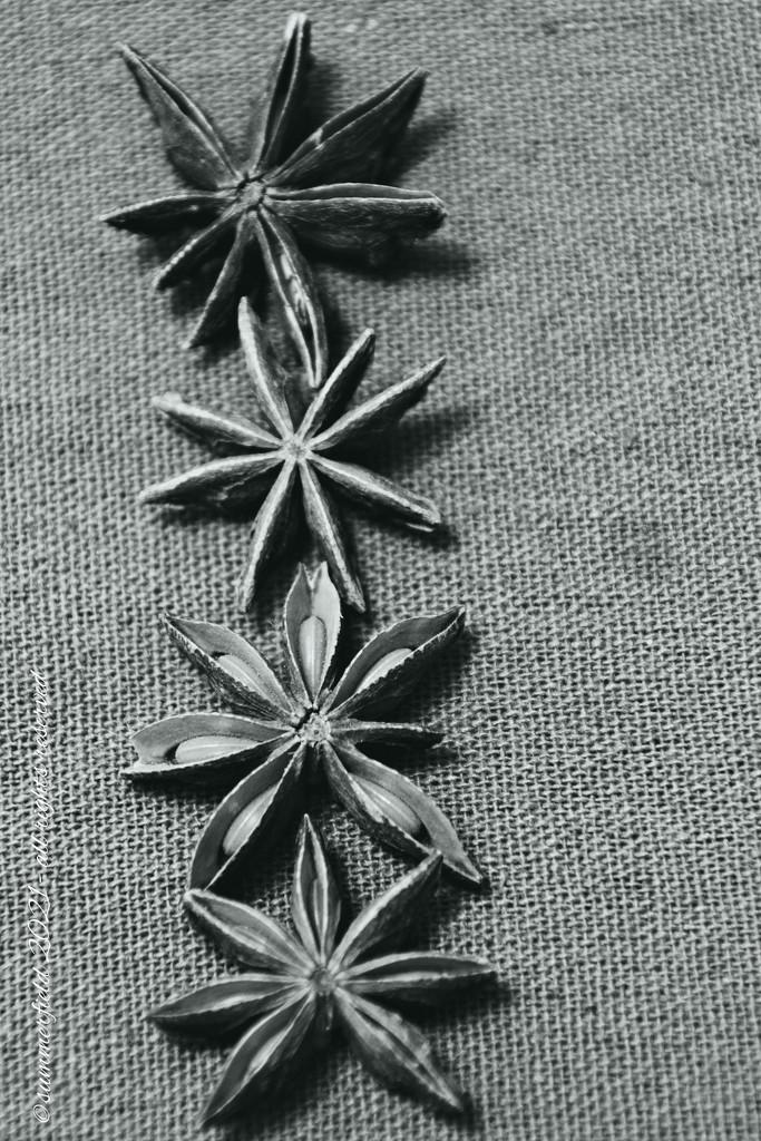 star anise à la blossfeldt by summerfield
