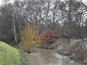 20th Jan 2021 - Rising River