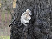 20th Jan 2021 - Squirrel