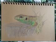 18th Jan 2021 - Little lizard