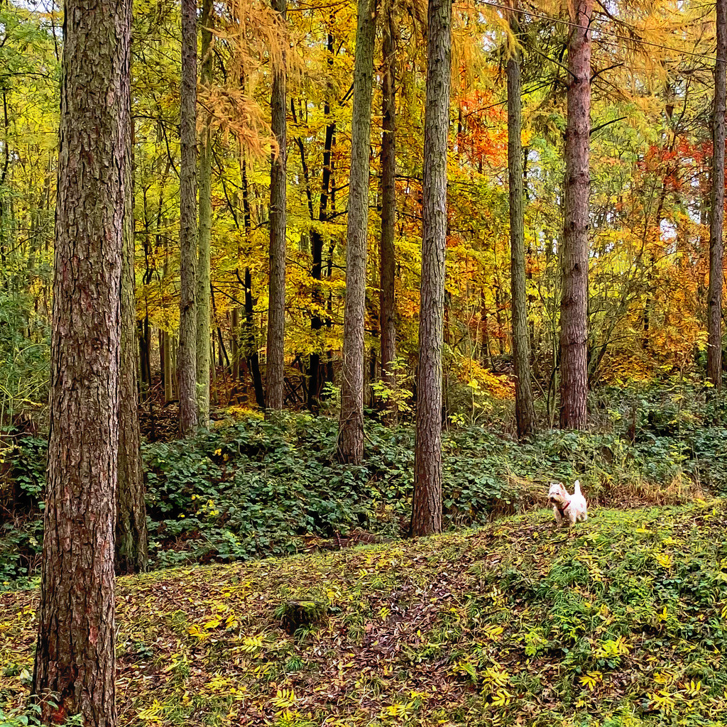 Autumn woods by pamknowler
