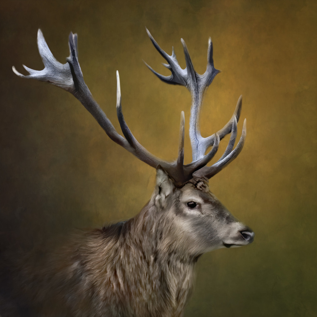 Red Stag by shepherdmanswife