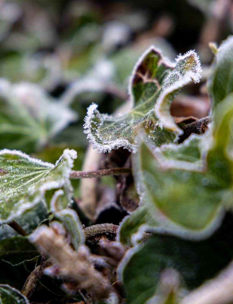 Frosty! by peadar