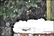 24th Jan 2021 - Battling the snow