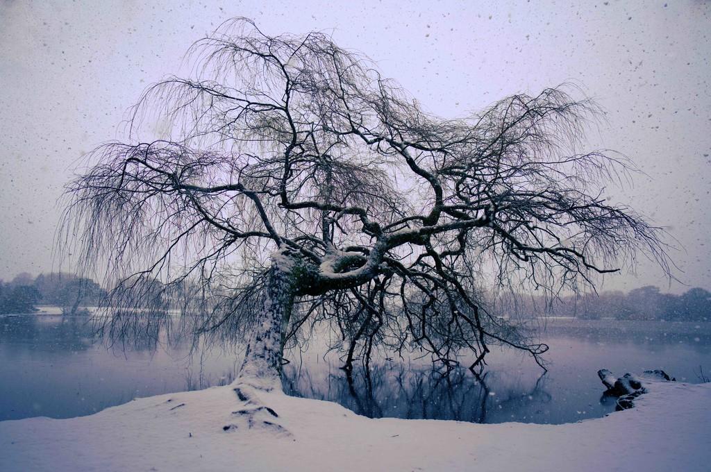 Snow  by moonbi