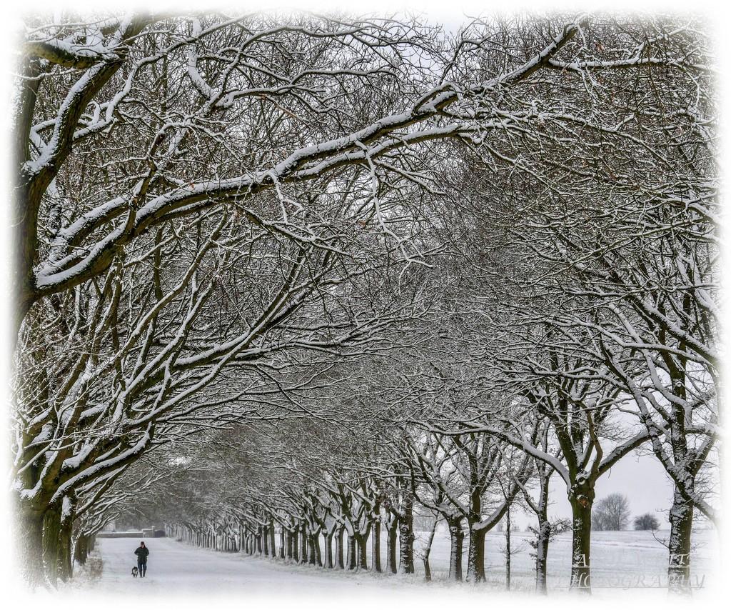 Avenue In The Snow by carolmw