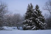 24th Jan 2021 - Snow 7