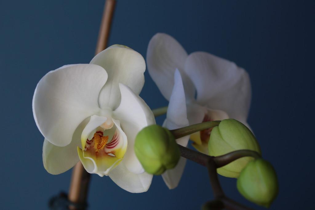 Bloom #2 by jb030958