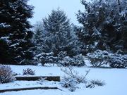 24th Jan 2021 - Snow!!