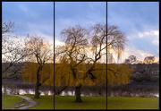 21st Jan 2021 - Tree Triptych