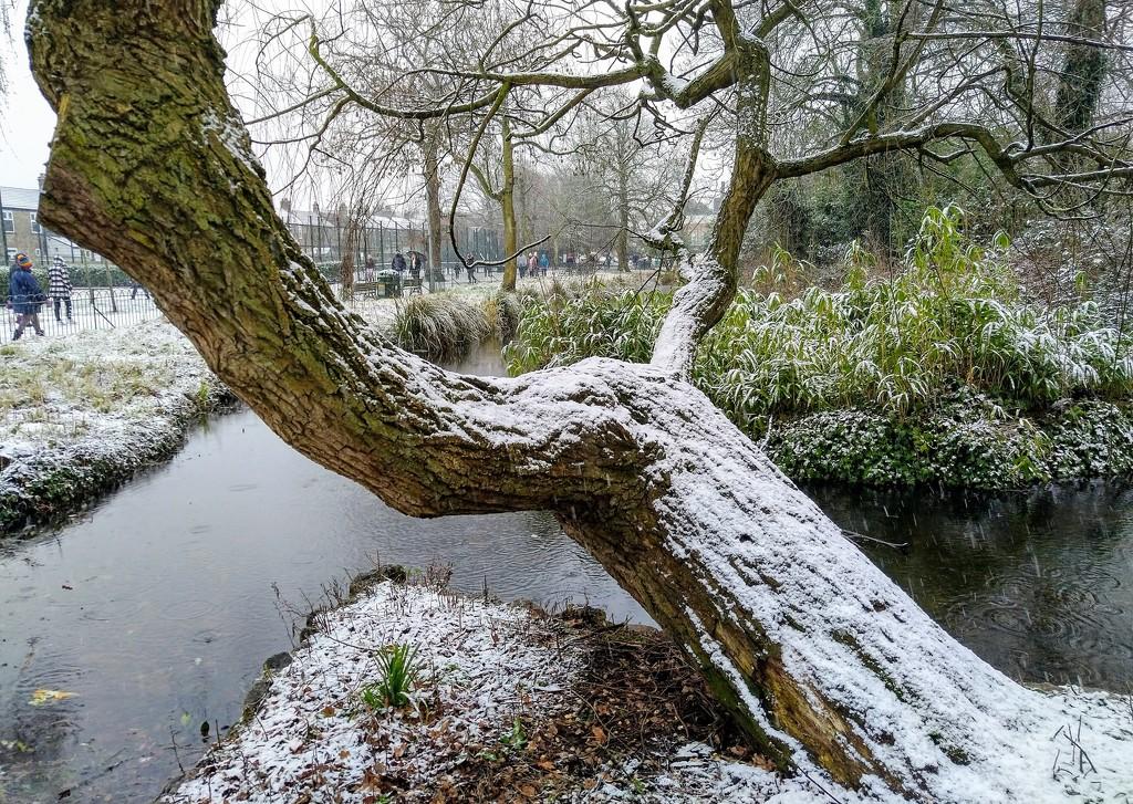 Snowy tree by boxplayer
