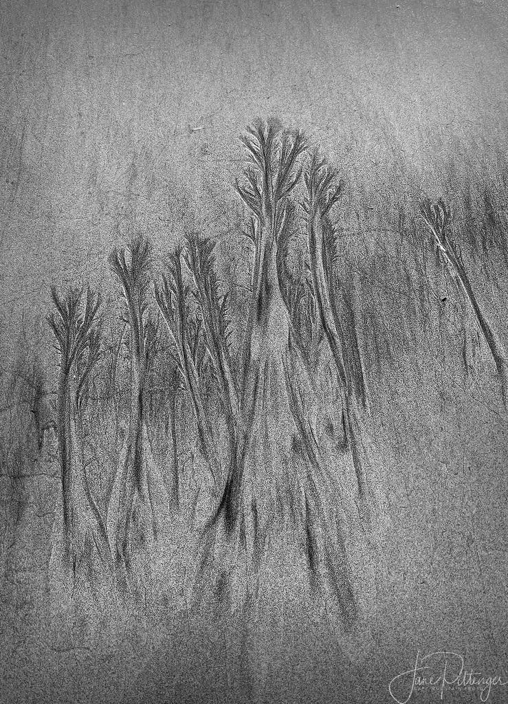 More Beach Art  by jgpittenger