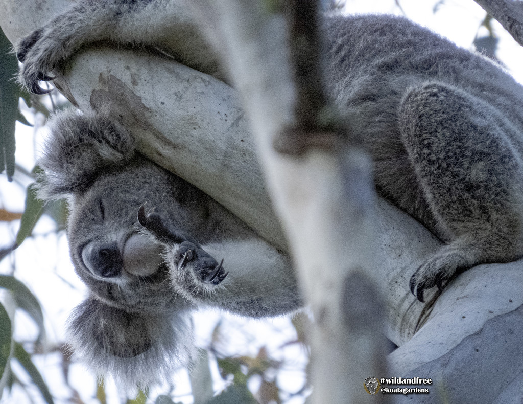 just can't stay awake one more minute by koalagardens