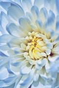 23rd Jan 2021 - Flower