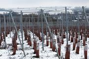 24th Jan 2021 - Pinglestone Estate Vineyard