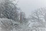 12th Jan 2021 - A snowy morning