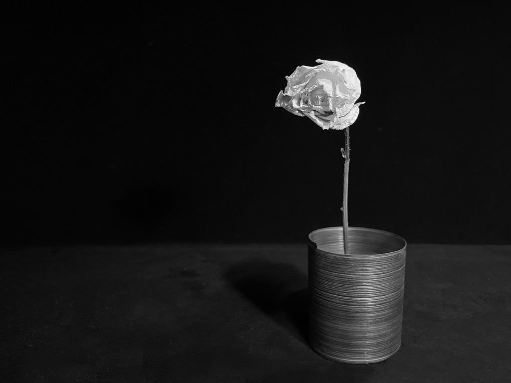 Dried Rose by sprphotos