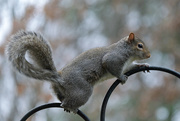 24th Jan 2021 - Squirrel Appreciation Day