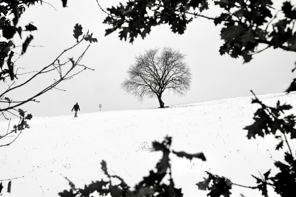 Odenwald in winter  by vincent24