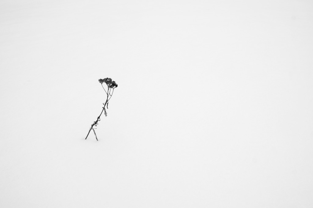 Lonely  by vincent24