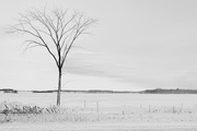 23rd Jan 2021 - Wintery Scene