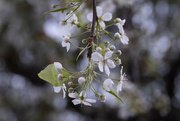 24th Jan 2021 - Winter Blooms