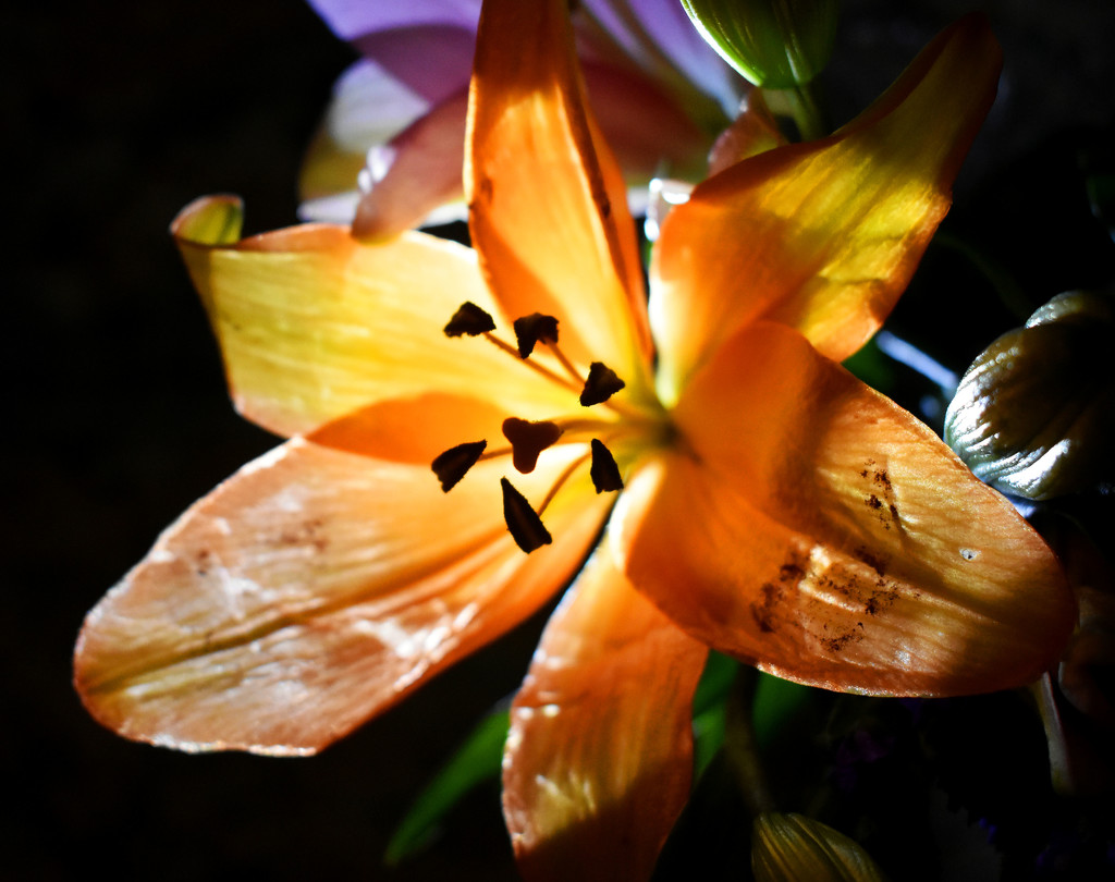 Lighted Lily by homeschoolmom