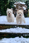 25th Jan 2021 - Boys in the snow