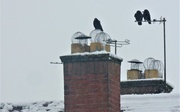 26th Jan 2021 - On the roof tops
