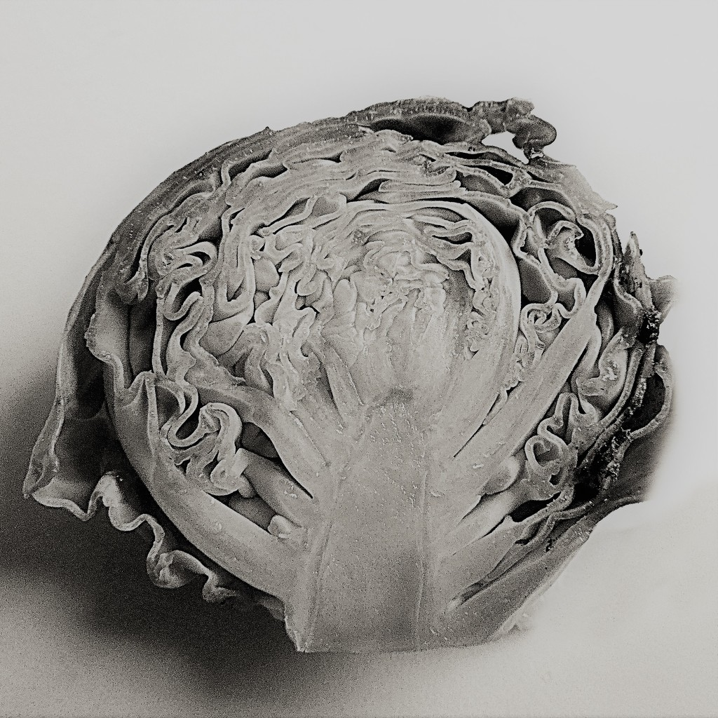 A vegetable in the style of Karl Blossfeldt by etienne