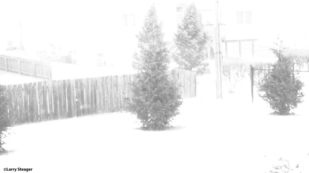 B&W falling snow by larrysphotos