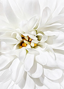 25th Jan 2021 - One Little Flower