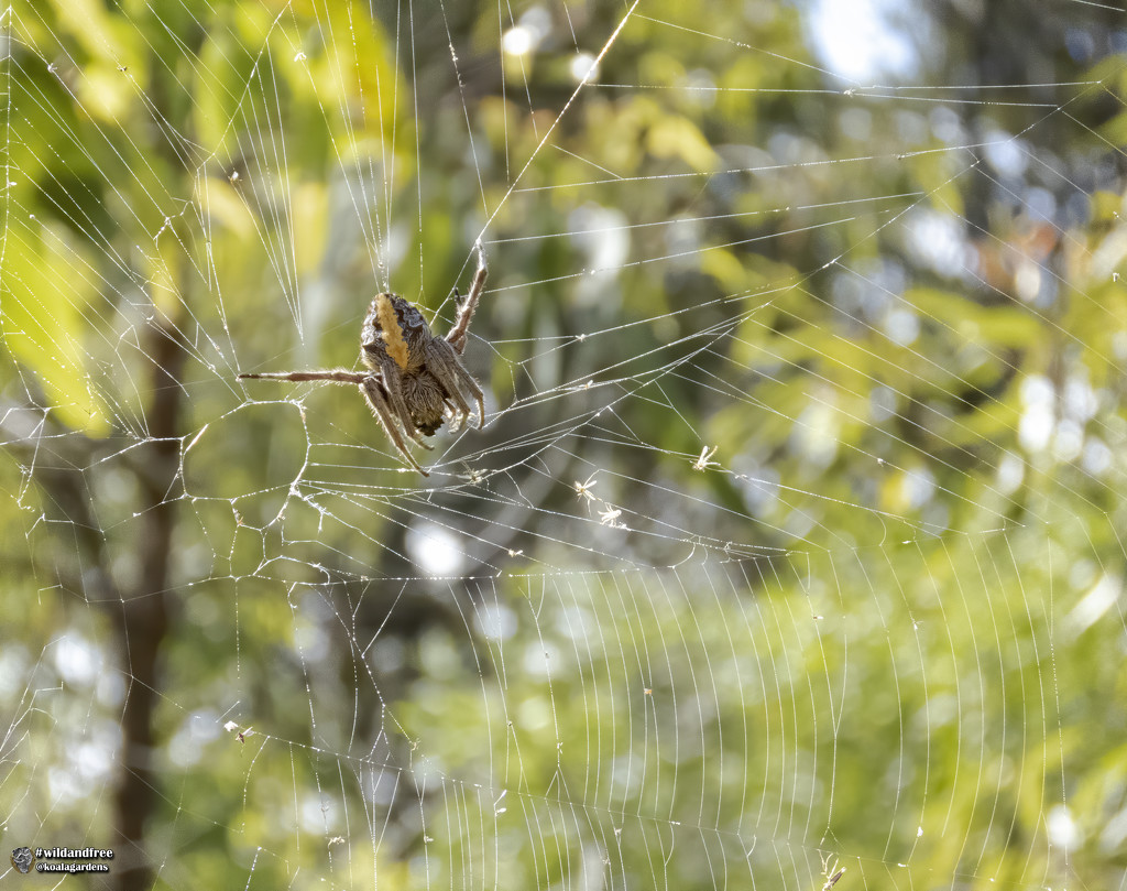 oh the tangled webs we weave by koalagardens